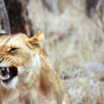How Anger Arises in the Body