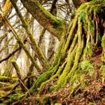 Strong Roots Make You Happy, Healthy, and Confident