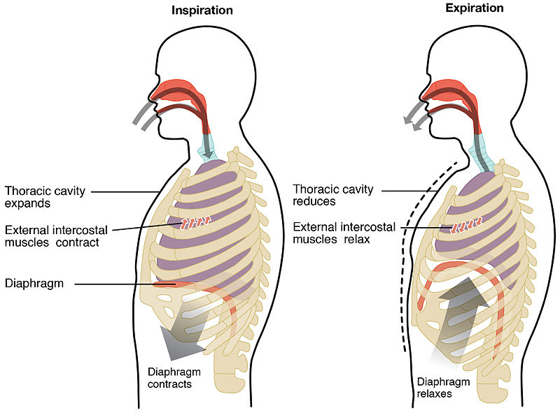 deep diaphragmatic breathing benefits